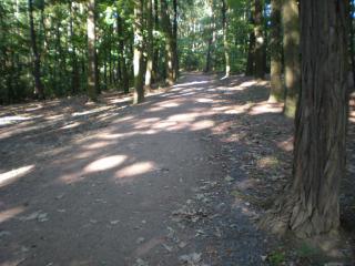2.Turniej-Drzonkow_Zielona-Park-028.jpg